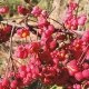 Famsation-Herbst-Blogbeitrag-2018